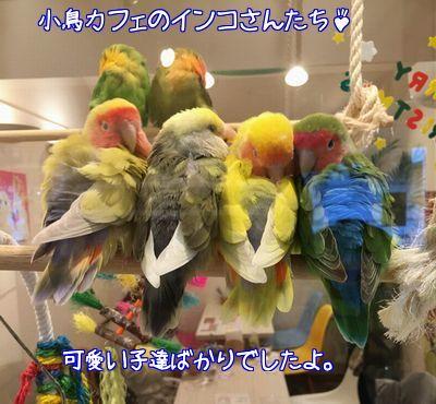 小鳥カフェの鳥さん