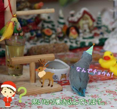 Merry Christmas4