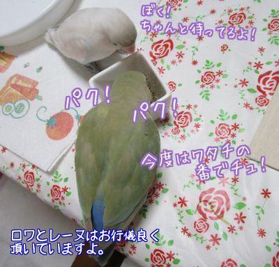 りっこさんからプレゼント8