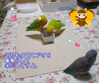 りっこさんからプレゼント10