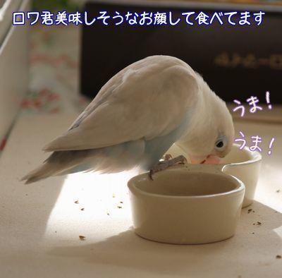 りっこさんから戴いたご飯3