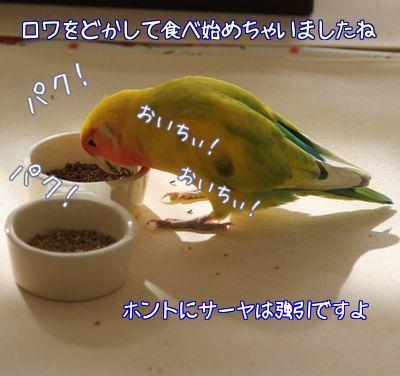 りっこさんから戴いたご飯6