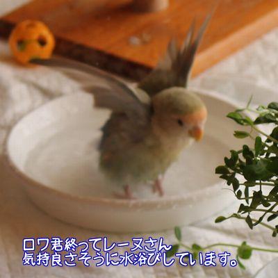 ダイエットの環境5