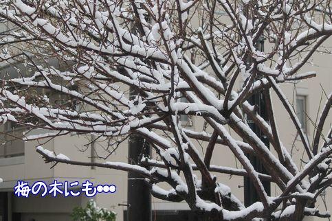 雪ですね1