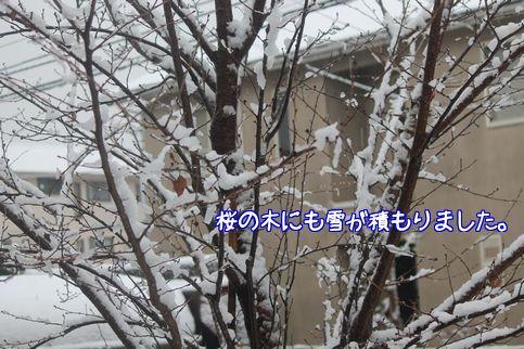 雪ですね2