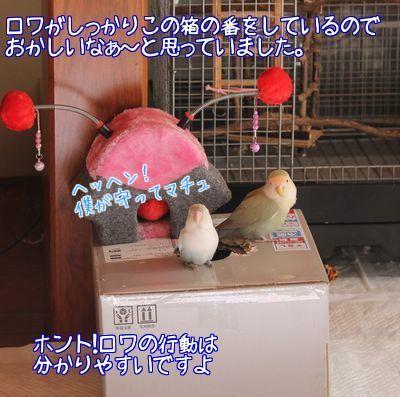 お節の箱1