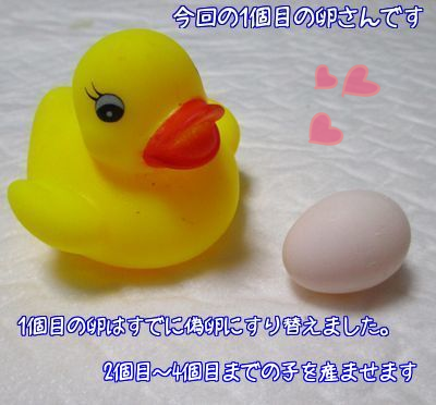 レーヌの卵