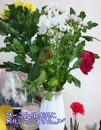 ピーコちゃんと花