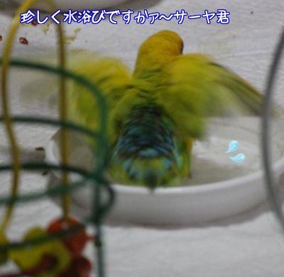 サーヤ水浴び1