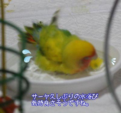 サーヤ水浴び2