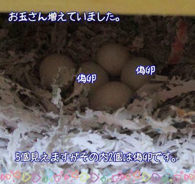 卵又一つ2