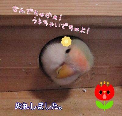 巣作りのお手伝い6