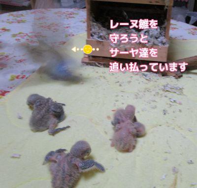 4羽の雛達2