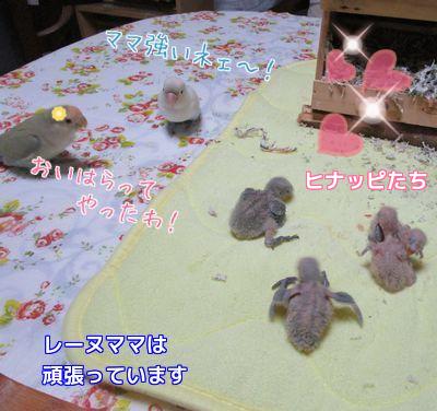 4羽の雛達3