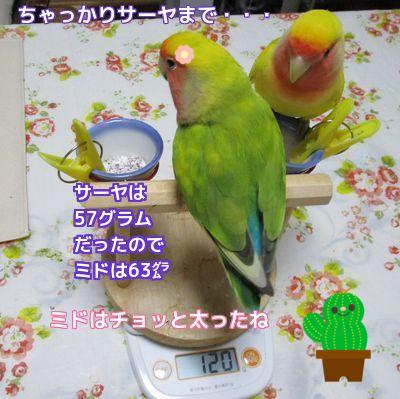 体重測定5
