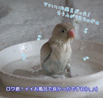 水浴びロワ2