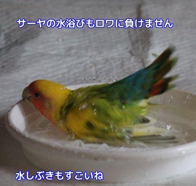 水浴びサーヤ1