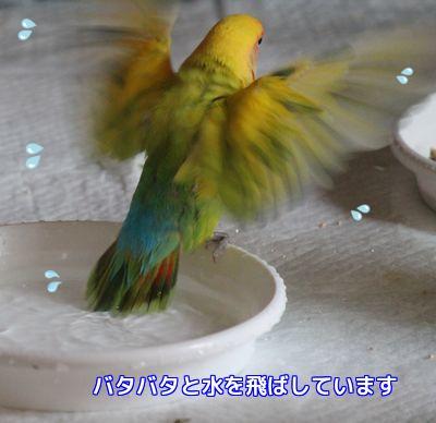 水浴びサーヤ2