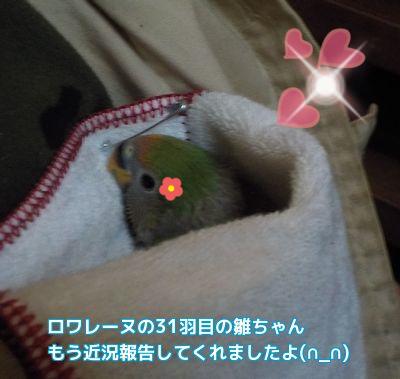31羽目の雛ちゃん