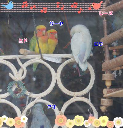 窓辺の5羽