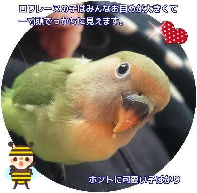 32羽目シーちゃん②