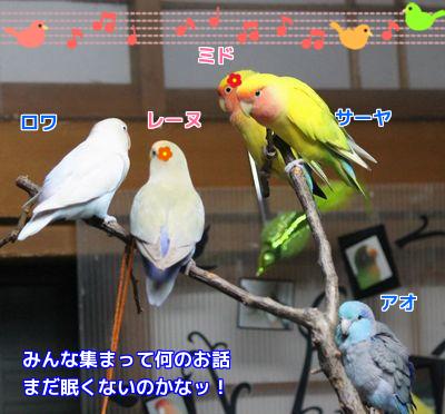 5羽揃い組②