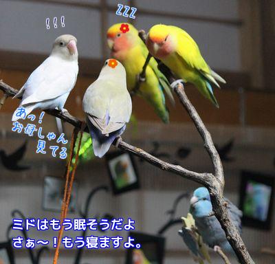 5羽揃い組①