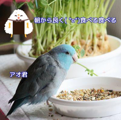 アオの食欲①