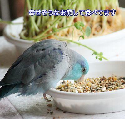 アオの食欲②