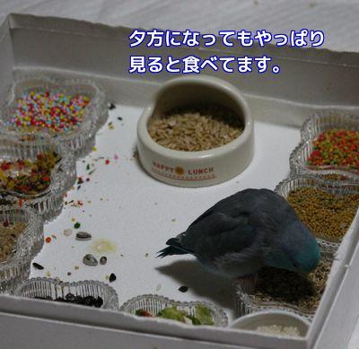 アオの食欲④