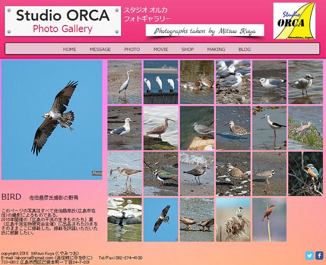 bird_2016012717104944f.png