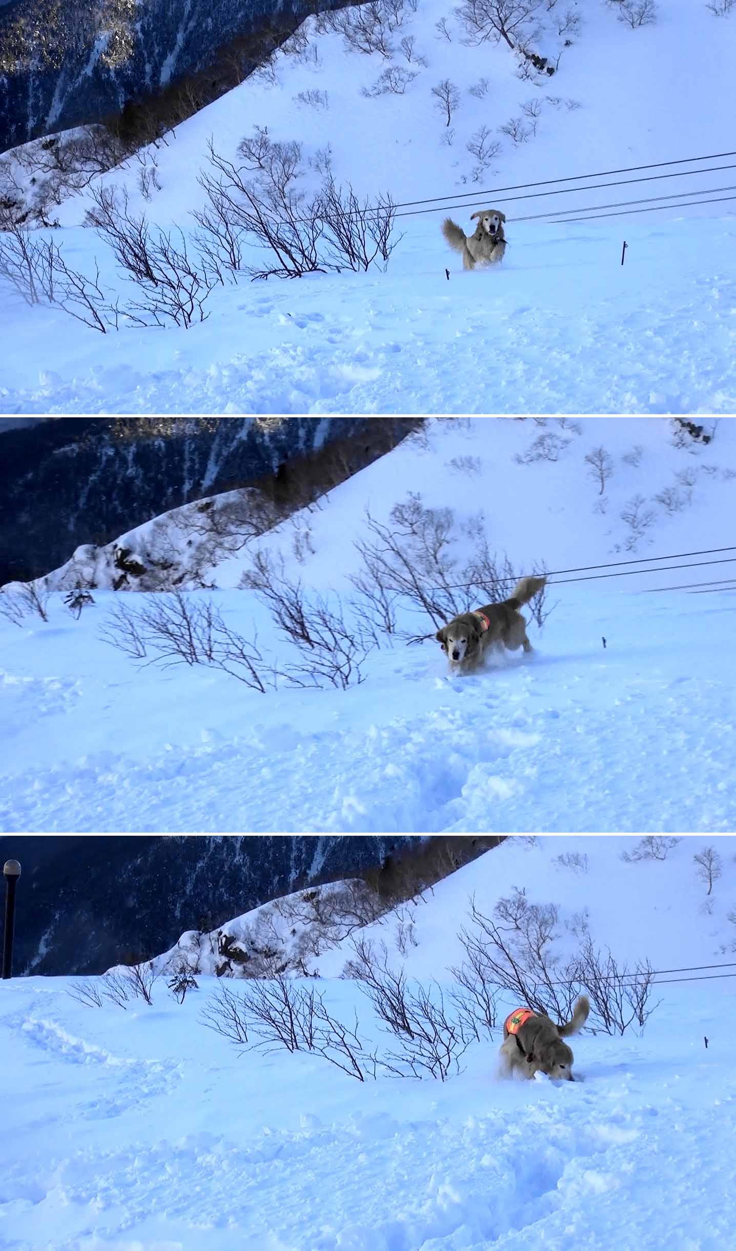 ヒットのシグマ捜索(5)