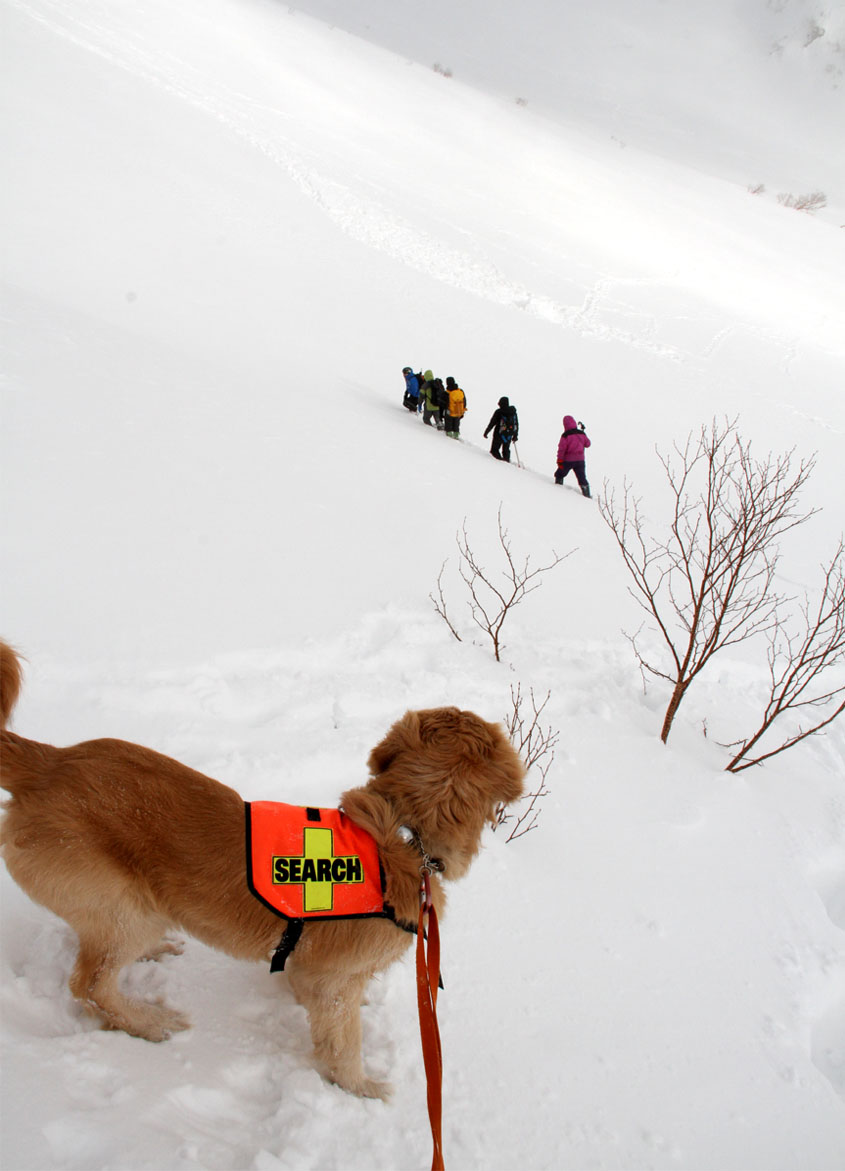 全国雪崩 2016 (45)
