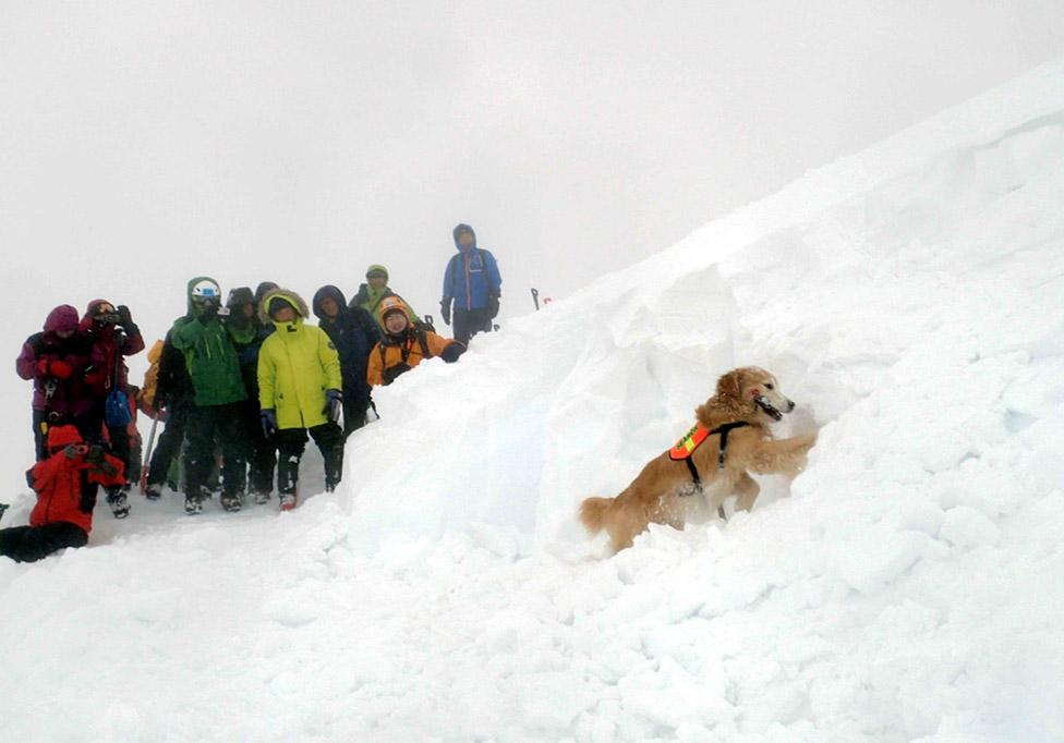 全国雪崩 2016 (64)