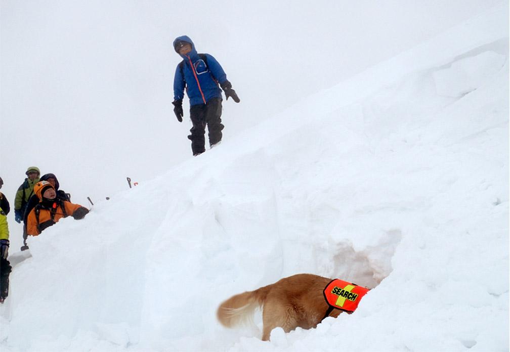 全国雪崩 2016 (65)
