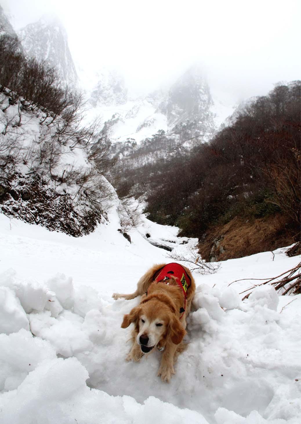 谷川岳雪中訓練 (4)