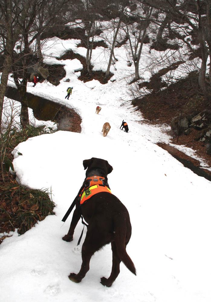 谷川岳雪中訓練 (14)