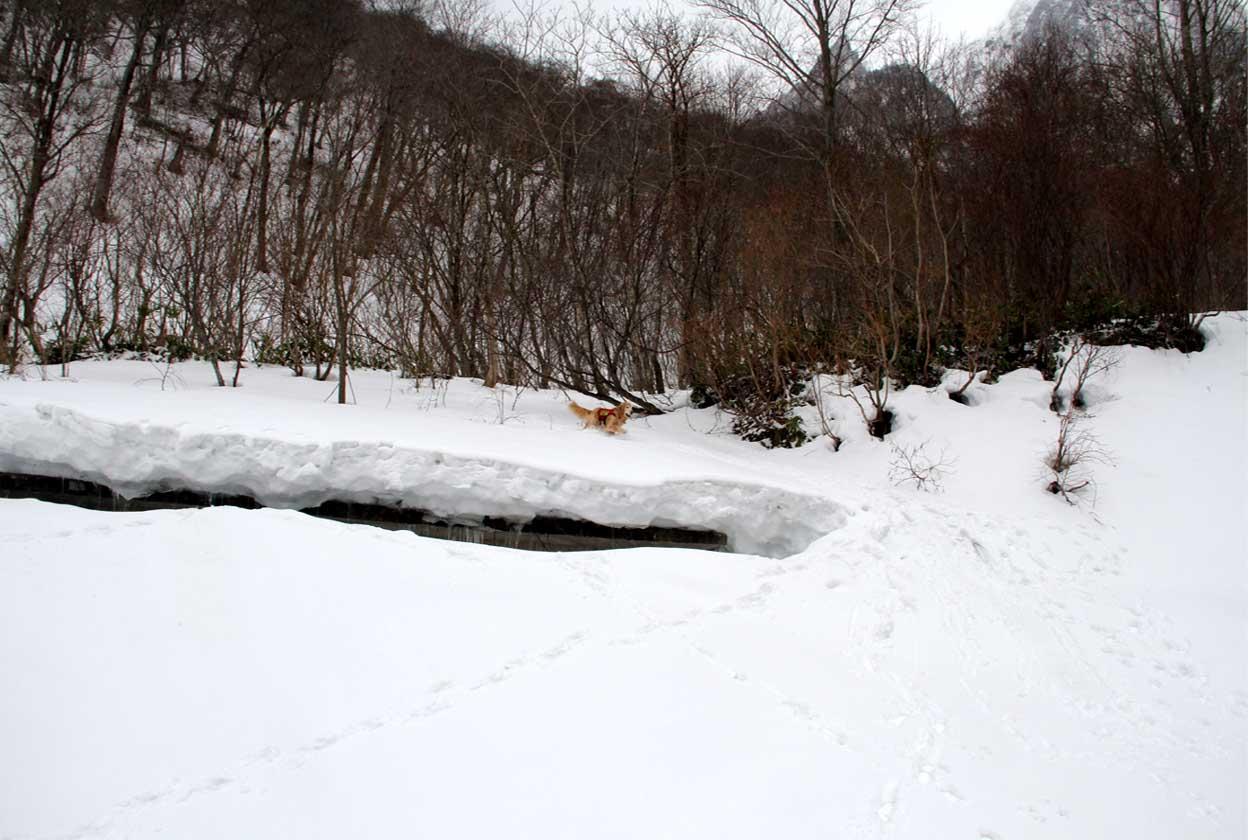 谷川岳雪中訓練 (42)