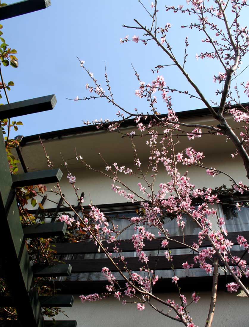 3月31日の桃模様(3)