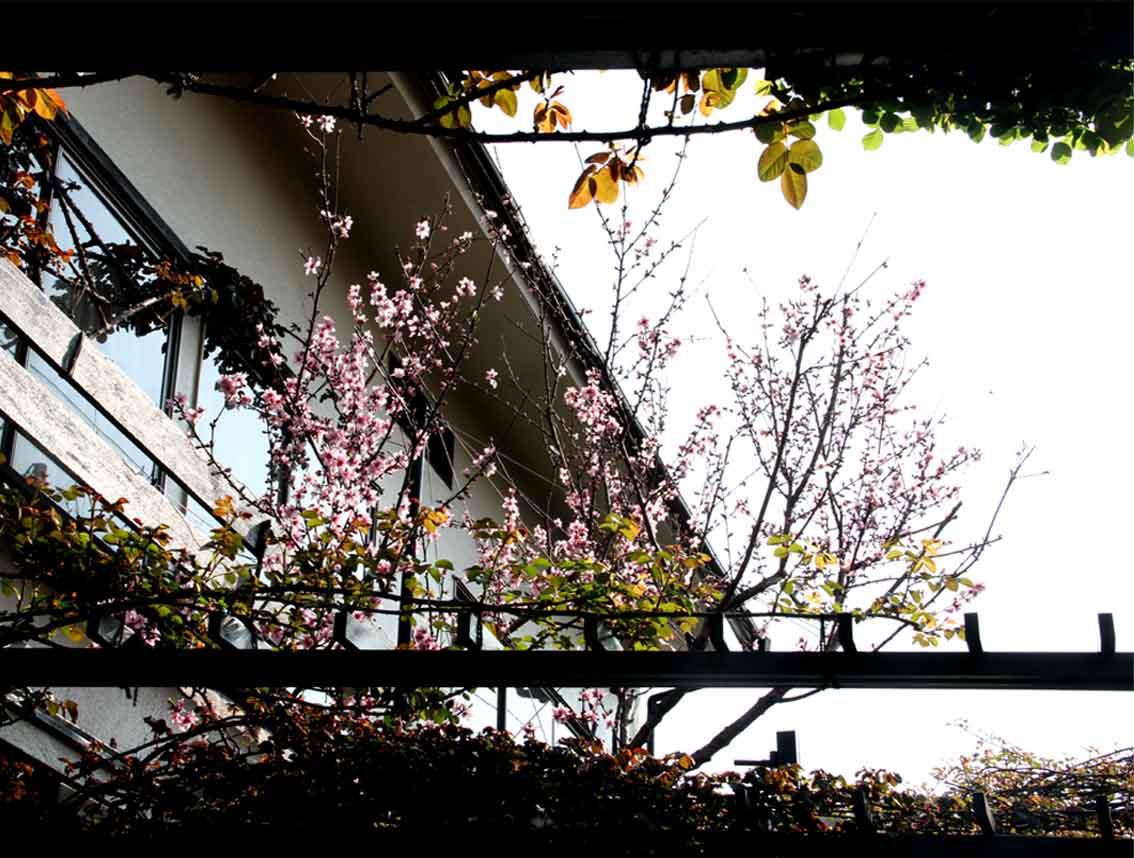 3月31日の桃模様(4)