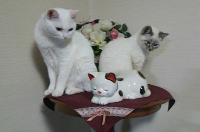 雪乃&仔猫