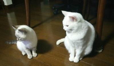 雪乃&仔猫3