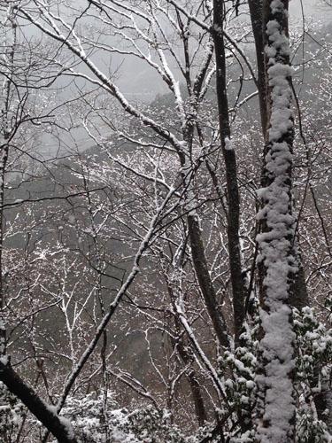 16022506三ノ戸山