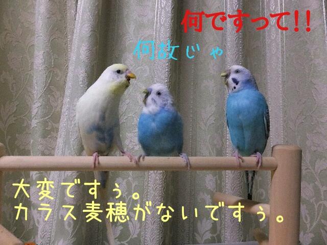 20160314164321af2.jpg