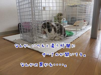 IMG_1451_20160330085942f87.jpg