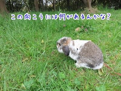 IMG_1622_201604031411301c7.jpg