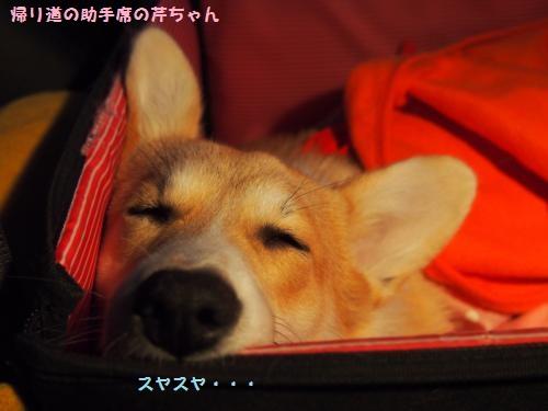 助手席で爆睡