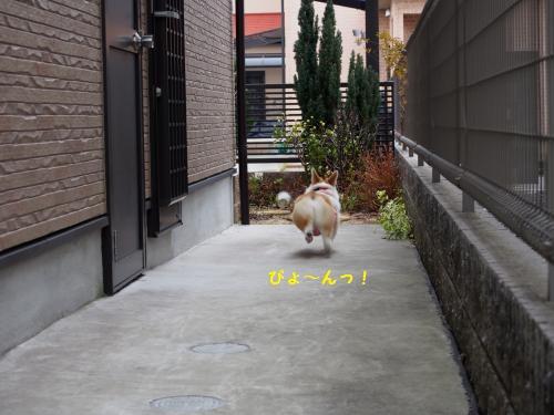 犬走りをぴょーん