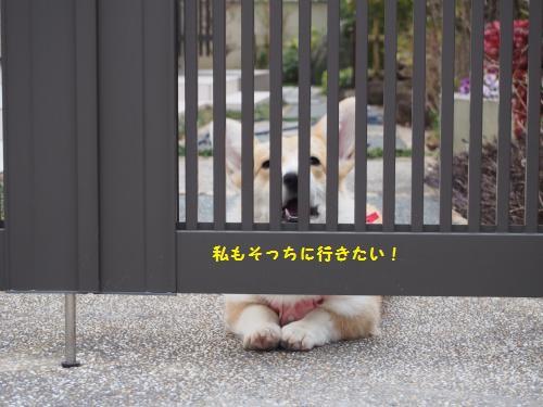 門あけてー