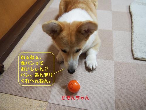 どきんちゃん1